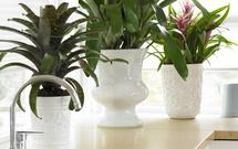 Rośliny doniczkowe - 7 zasad, jak aranżować rośliny doniczkowe w domu