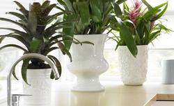 Kwiaty w domu. 7 zasad, jak aranżować rośliny doniczkowe