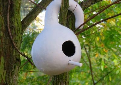 Ptaki w ogrodzie. Rośliny, które są schronieniem i pokarmem dla ptaków
