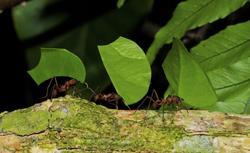 Sposób na mrówki w ogrodzie. Jak skutecznie z nimi walczyć?