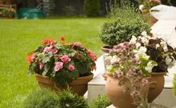 Rośliny doniczkowe - pomysł na aranżację i dekoracje ogrodu