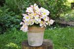 Poznaj rośliny na taras pięknie kwitnące wiosną i latem. 8 urokliwych roślin w donicach